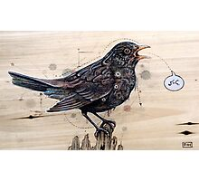 Blackbird Photographic Print