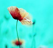 Fantasie Garden °1 by syoung-photo