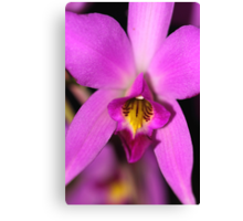 Magenta Orchid Canvas Print