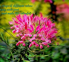 LIFE IS FULL OF COLORS by PALLABI ROY