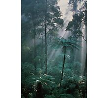 Forest Light I  Photographic Print