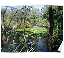 Peaceful Lagoon with Lillies Poster