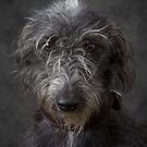 Lurcher 2  by Mark Cooper