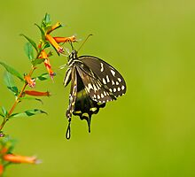 Hang In There Buddy Butterfly by imagetj