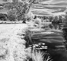 Herefordshire Riverside by Chris Tarling