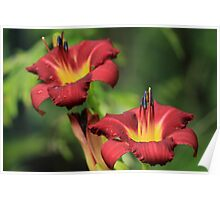 The Daylilies Poster