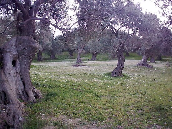 Olive Trees Marry A Flowers' Layer by iosifskoufos