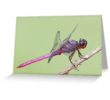 Roseate Skimmer Dragonfly Greeting Card