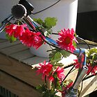 15/8 it's spring and the bicycles bloom by Evelyn Bach