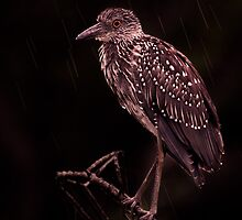 In the Rain by Paul Wolf