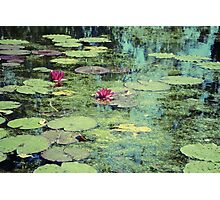 Water Lilies Pond Photographic Print