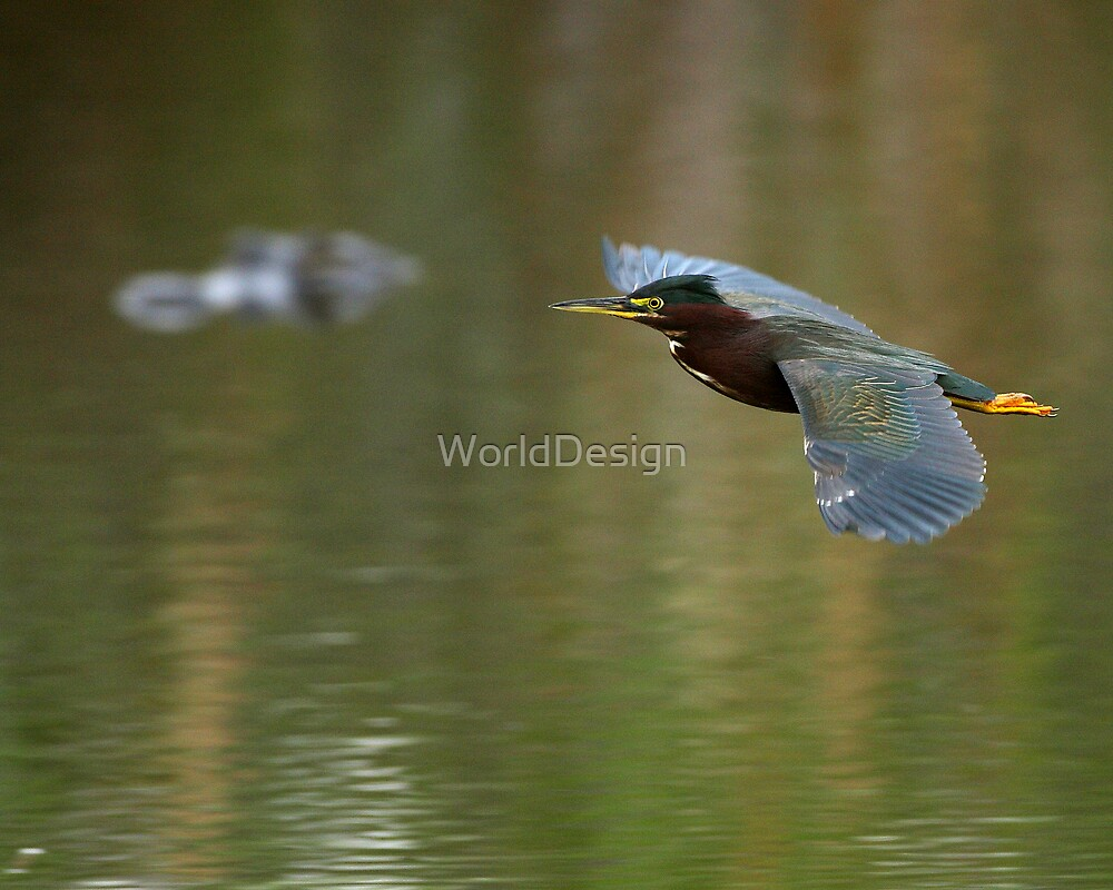 Green Heron & Gator by William C. Gladish, World Design