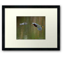 Green Heron & Gator Framed Print
