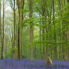 Bluebell Carpet IV by Chris Tarling