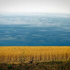Storm Behind Wheat Field by Lisa Diamond