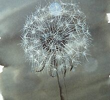 delicate dandelion by Hannah Clair Phillips