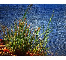 Lake Edge Photographic Print