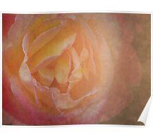 Desert Rose Poster