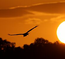 Sunset Flight by William C. Gladish
