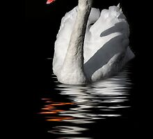 swan reflected in  dark water by guido nardacci