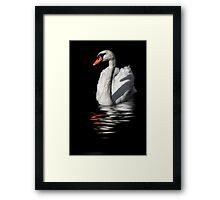 swan reflected in  dark water Framed Print