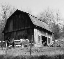 Out Behind The Barn by Jean Gregory  Evans