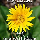 """Obey the Lord and you will bloom"" Color by Carter L. Shepard by echoesofheaven"