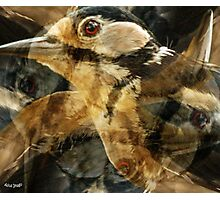 Designs Inspired By Nature: Great Spotted Woodpecker Photographic Print