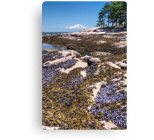 Gulf Islands National Park Reserve, British Columbia, Canada Canvas Print