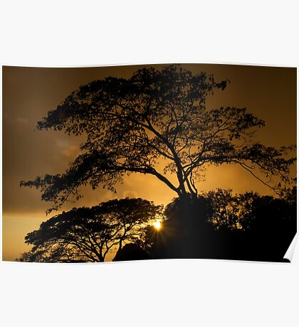 Monkey tree sunset Poster