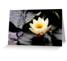 Floating on water... Greeting Card