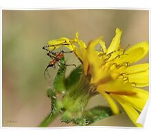 Grasshopper Investigating His Macro World Poster