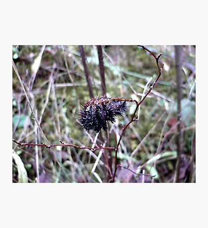 Wooly Booger Photographic Print