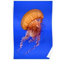Sea Nettle Poster