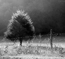 Morning Fog O'er Cow Pasture by Jean Gregory  Evans