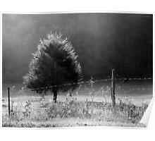 Morning Fog O'er Cow Pasture Poster