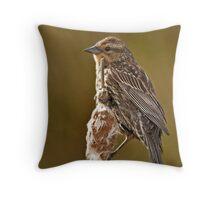 Redwing Blackbird, female Throw Pillow