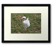 Blue Eyed Baby Bird - At Lake Tobias Framed Print