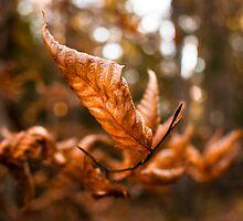 Old Oak leaving summer behind by Nancy Killam