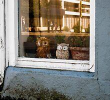 The world outside. by Nancy Killam