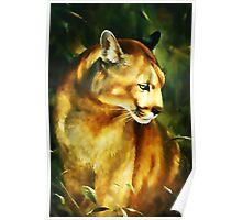 Cougar (Puma concolor) Poster