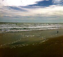 Cocoa Beach by Larissa  White Brown