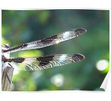 Amelia Earhart Propellers in nature Poster