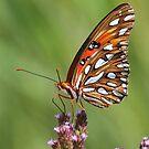 butterflies by jozi1