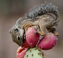 Prickly Pear Breakfast  by Saija  Lehtonen