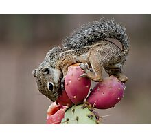 Prickly Pear Breakfast  Photographic Print