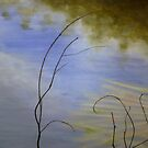 Yea river reflections by Pam Wilkie