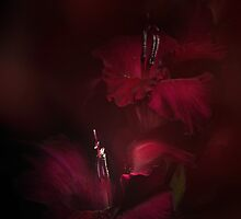 Deep red by EbyArts