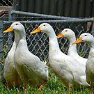 Six little ducks by Deborah Clearwater
