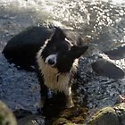Indy in the River by Michael Haslam